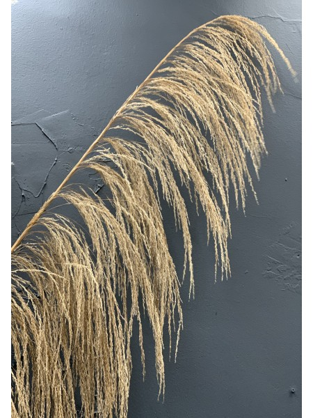 Ornamental Dried Pampas Grass