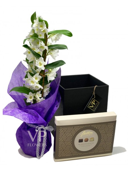 Dendrobium White Orchid & Chocolates