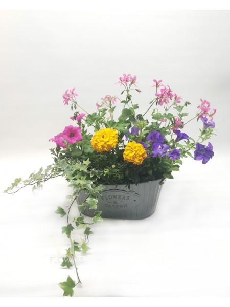 Summer Plant Pot (No.1)