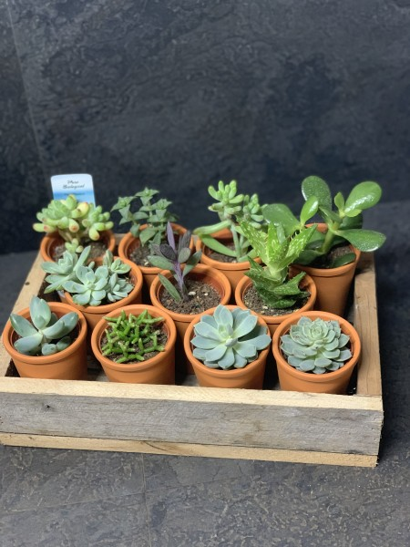 Succulent Tray