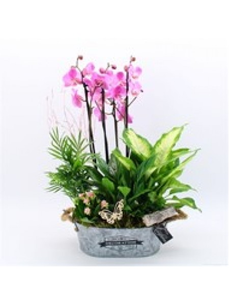 House Plant Gift Pink